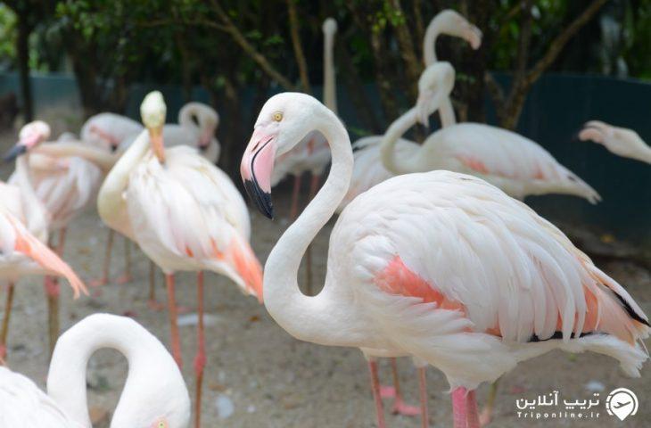 پارک پرندگان مالزی